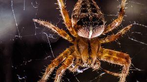 Превью обои паук, насекомое, крупным планом, паутина, лапки