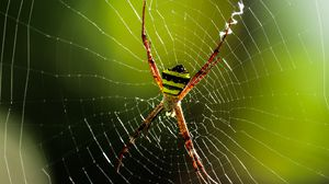 Превью обои паук, насекомое, паутина, макро