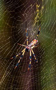 Превью обои паук, насекомое, паутина, нити, макро