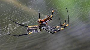 Превью обои паук, паутина, макро