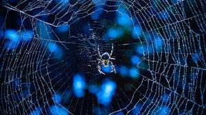 Превью обои паук, паутина, насекомое, блики