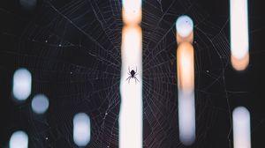 Превью обои паук, паутина, плетение, свет