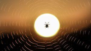Превью обои паук, паутина, солнце, закат, темный