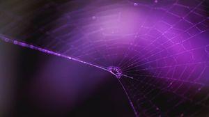 Превью обои паутина, фиолетовый, плетение