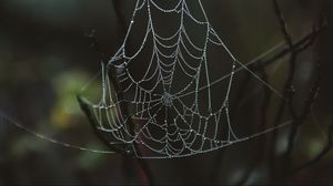 Превью обои паутина, капли, крупным планом