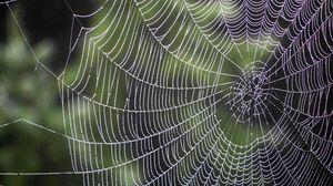 Превью обои паутина, капли, плетение