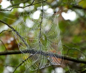 Превью обои паутина, капли, ветки, макро
