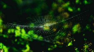 Превью обои паутина, паук, макро, крупный план