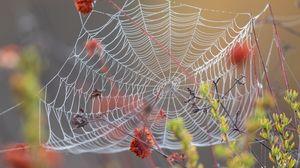 Превью обои паутина, роса, мокрый, макро