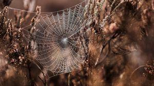 Превью обои паутина, трава, плетение, размытость, туман