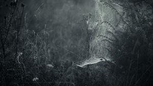 Превью обои паутина, туман, чб, плетение, трава