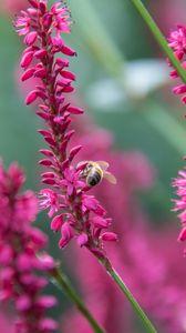 Превью обои пчела, насекомое, цветы, растения, макро, розовый