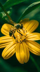 Превью обои пчела, цветок, опыление, желтый, размытость