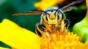 Превью обои пчела, усы, цветок, насекомое, светлый