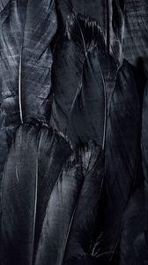 Превью обои перья, черный, темный