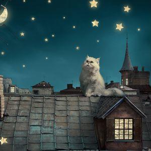 Превью обои персидские белый кот, котенок, сказка, фэнтези, крыши, дома, небо, ночь, звезды, луна