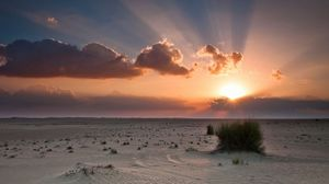 Превью обои песок, деревья, трава, небо, закат