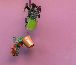 Превью обои петуния, цветы, горшки, минимализм