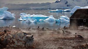 Превью обои пингвины, атмосфера, ледники, вода, дом, туман