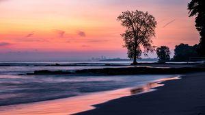 Превью обои пляж, побережье, дерево, сумерки, темный