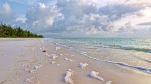 Превью обои побережье, зелень, прибой, море, песок, природа, пена