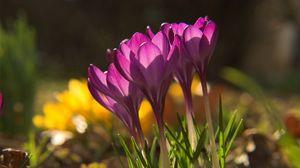 Превью обои подснежники, весна, трава, лепестки, тень, свет