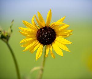 Превью обои подсолнух, цветок, макро, желтый