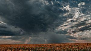 Превью обои подсолнухи, поле, облака, сумерки