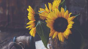 Превью обои подсолнухи, цветы, лепестки, ваза, желтый, эстетика