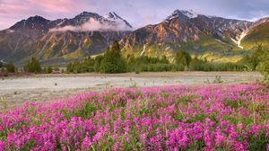 Превью обои поле, цветы, горы, трава