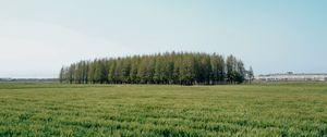 Превью обои поле, деревья, трава, пейзаж, зеленый