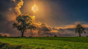 Превью обои поле, деревья, трава, небо, пасмурно