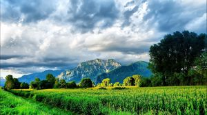 Превью обои поле, кукуруза, зелень, лето, горы, небо, ярко