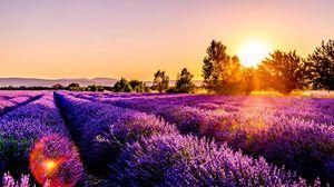Превью обои поле, цветы, закат, дром, франция