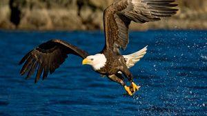 Превью обои полет, крылья, орел, брызги, птица, вода