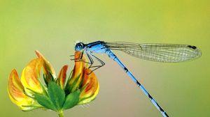 Превью обои полет, насекомое, цветок, крылья
