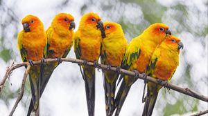 Превью обои попугаи, птицы, ветка, яркий