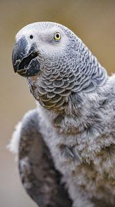 Превью обои попугай, птица, клюв, перья, серый