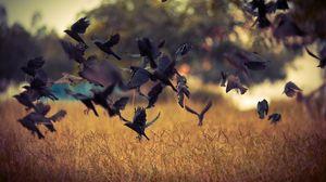 Превью обои птицы, взлет, вороны, черные, поле