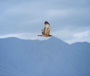 Превью обои птица, полет, небо, дикая природа