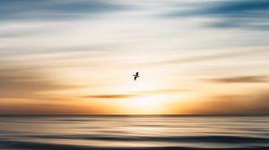 Превью обои птица, полет, океан, вода, минимализм