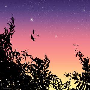 Превью обои птицы, полет, звезды