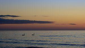 Превью обои лебеди, птицы, силуэты, море, вода, закат