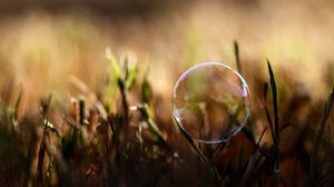 Превью обои пузырь, влага, трава, блики