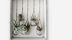 Превью обои рамка, банки, цветы, растения, декор
