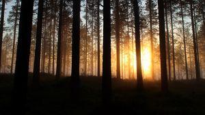 Превью обои рассвет, деревья, лес, лучи, солнце