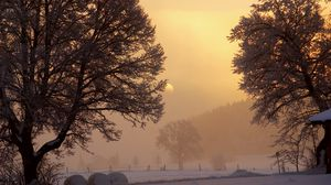 Превью обои рассвет, зима, солнце, небо, просвет, утро, деревья, снег, туман, мороз, двор