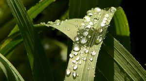 Превью обои растение, листья, капли, зеленый, макро