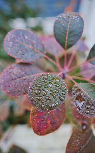 Превью обои растение, листья, капли, макро, мокрый