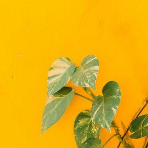 Превью обои растение, листья, стена, желтый, минимализм